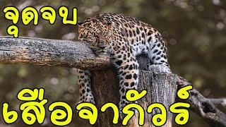 สัตว์ 5 ชนิด ที่สามารถพิชิตเสือจากัวร์ได้#ตามไปมอง