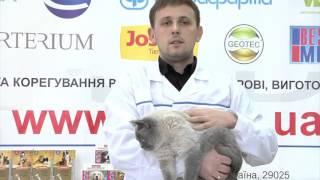Дегельминтизация мелких домашних животных