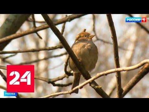Природа очищается: режим самоизоляции благотворно повлиял на экологию в Москве - Россия 24