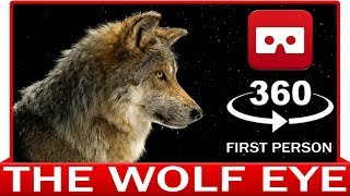 360° VR VIDEO - Wolf in point of View - Eye of Lupus - Howling Growling - POV - VIRTUAL REALITY 3D
