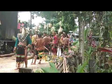 Ritual Adat Nemlen/Nemlai Dayak Wehea