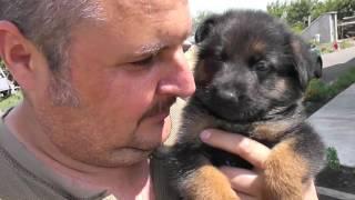 Частный дом - ремонт день #20 Пятница Купил собаку, провёл интернет