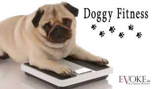 Doggy Fitness | Swimming | Evoke.ie