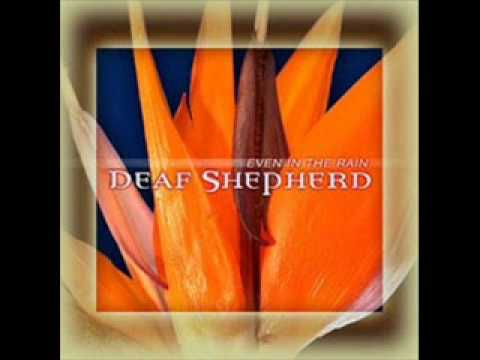'Even in the Rain' ~ Deaf Shepherd