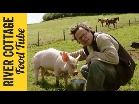 Keeping Pigs - Part 2   Hugh Fearnley-Whittingstall