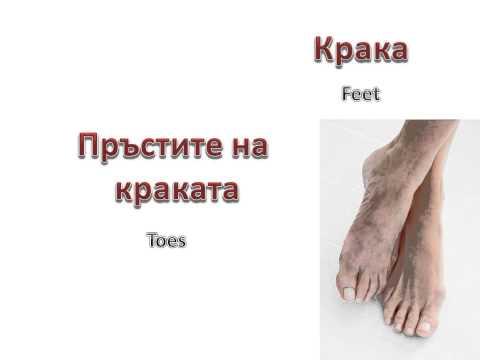 Learn Bulgarian: Human Body (Човешкото тяло)