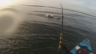 Botany Bay Fishing -Bull Shark encounter