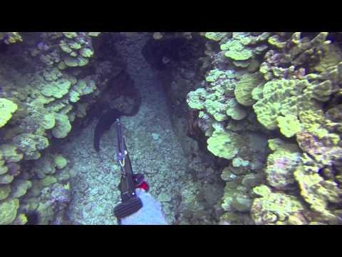 Hawaii Dreaming Spearfishing In Hawaii