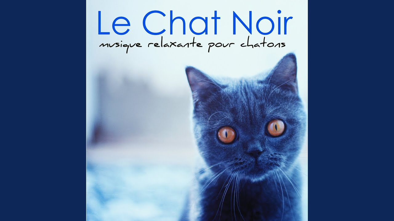 musique relaxation pour chat