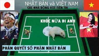 Việt Nam vs Nhật bản- Người NHật bật khóc nức nở sau khi xem các nhà tiên tri động vật dự đoán