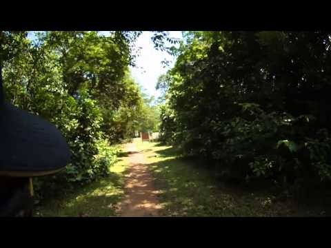Retracing the Route from MacRitchie Reservoir to Bukit Timah Nature Reserve