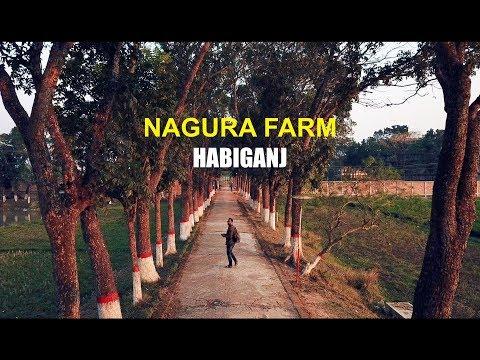 Nagura Farm Rickshaw Tour - HABIGANJ Drone   Bangladesh vlog