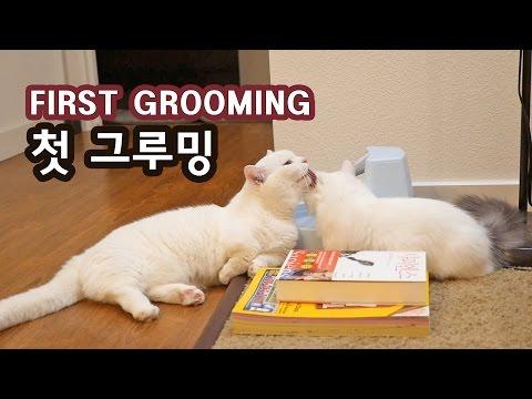 고양이 꼬부기와 쵸비의 첫 그루밍 CAT GROOMS KITTEN FOR THE FIRST TIME