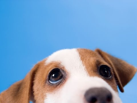 5 Awesome Dog Facts -- Thought Glass #4