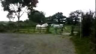 horses x x x