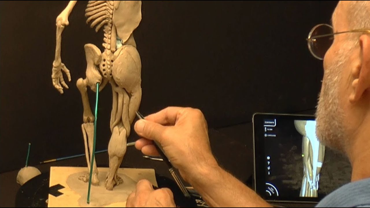 Human Anatomy Sculpture Ecorche 16fd Youtube