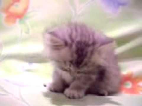 Ворона и кошка - кто хитрей? смотреть видео прикол - 2:15