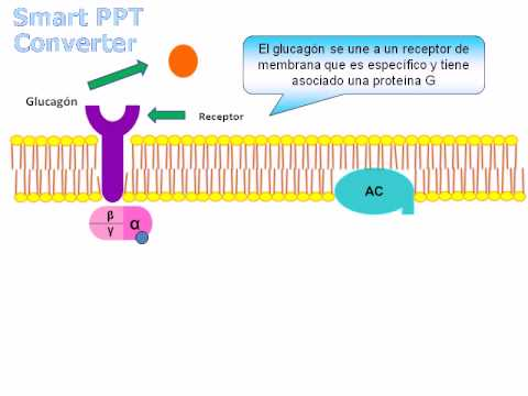 Presentacion de adp en el seb con espontaneo incluido - 1 3