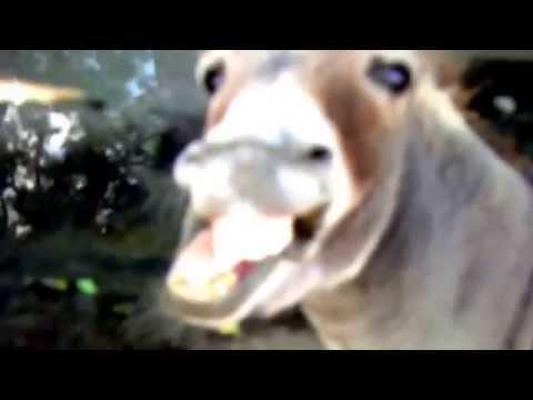 Odd-toed Hoofed Animals