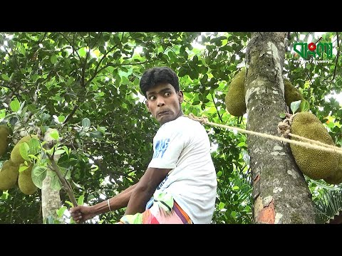 Best of Mohiner Ghoraguli from YouTube · Duration:  41 minutes 53 seconds