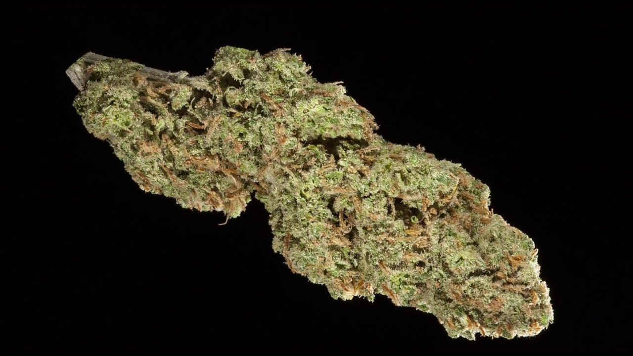 2015 HIGH TIMES SoCal Medical Cannabis Cup: Sativa Entires