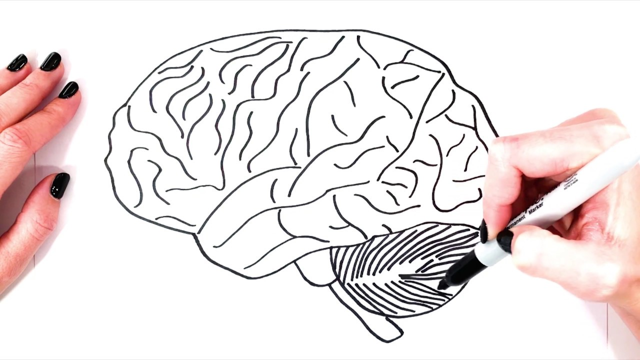 How To Draw A Brain Step By Step   Realistic Brain Drawing ...