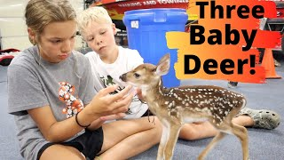 Pet Deer Had Triplets! Super RARE!