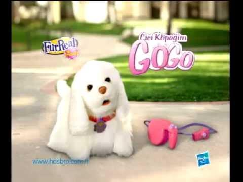 Gogo Walking Dog