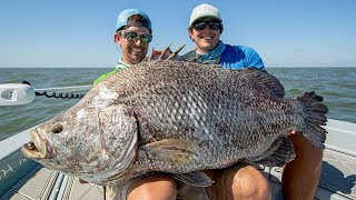 MASSIVE Record Size Tripletail Fish