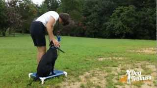 Whistle Sits And Delivering To Heel Position: Dog Training Lesson With Connie Cleveland