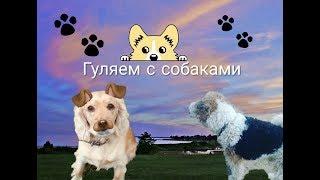 Гуляем с собаками🐶/ Love _dogs
