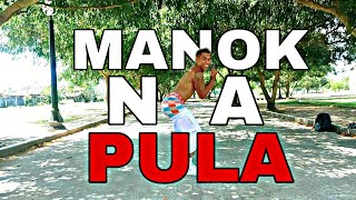 Download lagu MANOK NA PULA | Remix by Dj Sandy | OPM | Dance Challenge | NGZ CREW