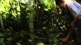 LOS ANIMALES MAS PELIGROSOS DEL MUNDO - 7 - EL AMAZONAS