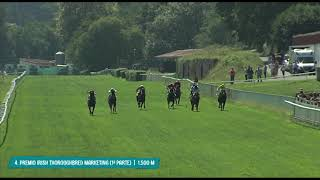 Vidéo de la course PMU PREMIO IRISH THOROUGHBRED MARKETING