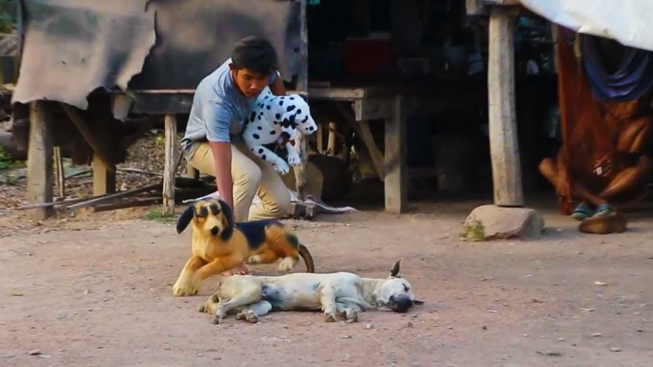 New Top Funny Comedy Video 2021 Try Not To Laugh - Fake Dog Prank Vs Real Dog In Village- Episode 15