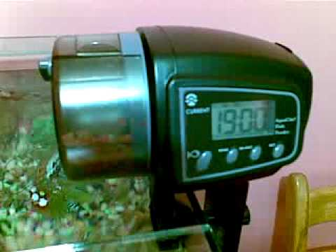 Alimentador autom tico de peces automatic fish feeder for Alimentador automatico peces