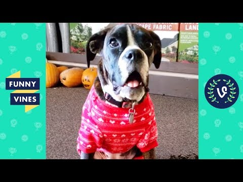 TRY NOT TO LAUGH - Funny Animals & Pet Videos | November 2018