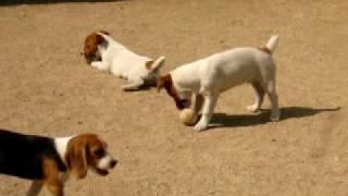 鈴木訓練所 http://www.dog-suzusho.com/