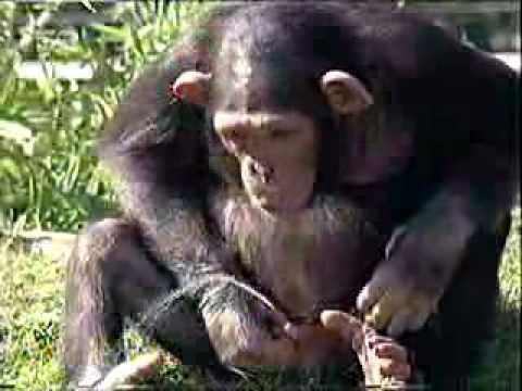 Adult Zoo Videos