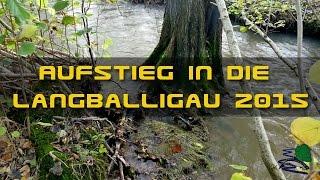 Meerforellen Aufstieg in die Langballigau 2015