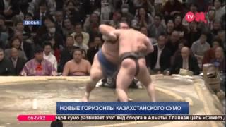 О развитии сумо в Казахстане