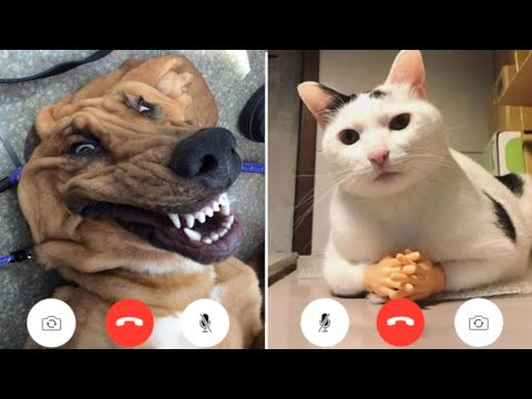 Funny Animal Videos that Will 100% Make You Laugh 😂