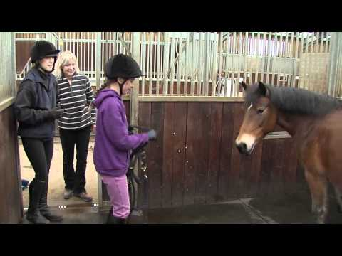 How rehoming a rescue horse is both simple and rewarding
