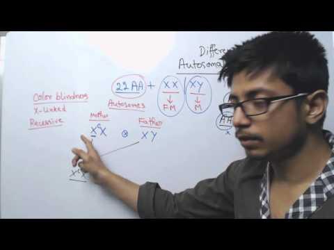 Autosomal and X Linked Inheritance