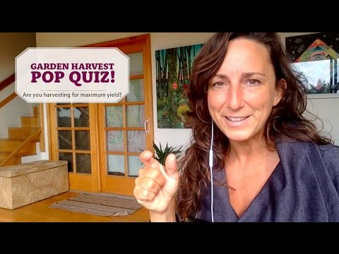 Garden Harvest Pop Quiz - (Organic Vegetables & Herbs)