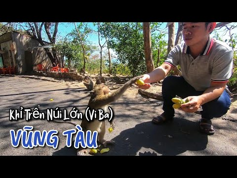 Khỉ Trên Núi Lớn Ở Vũng Tàu   The Monkey In Vung Tau