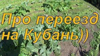 Про переезд на Кубань.