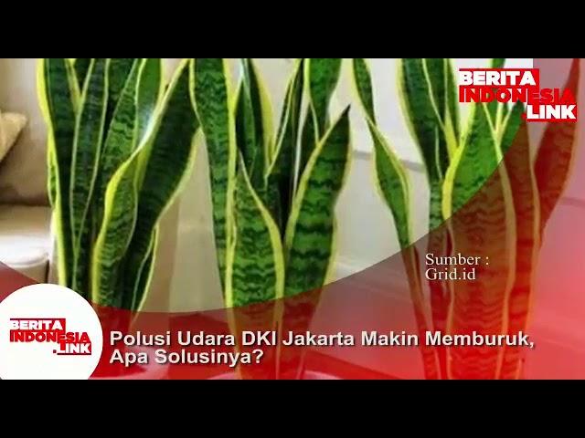 Polusi udara di DKI Jakarta makin buruk, tanaman ini solusi utk didalam rumah.