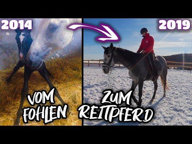 Vom Fohlen zum Reitpferd ✮ Rubielle - mein selbstgezogenes Fohlen wird erwachsen ♥