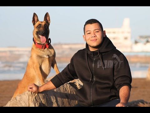The Moroccan Malinois Obedience ,Tricks  2017 NEW!!